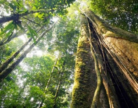 Пряный лес (Spicied wood)